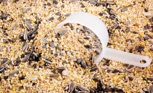 Birdseed with scoop.