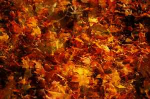 Three separate images of autumn leafs blended together to create a texture or background.