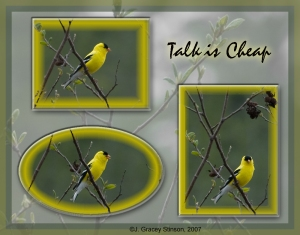Talk is cheap - poster of yellow finch