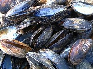 Empty Muscle Shells