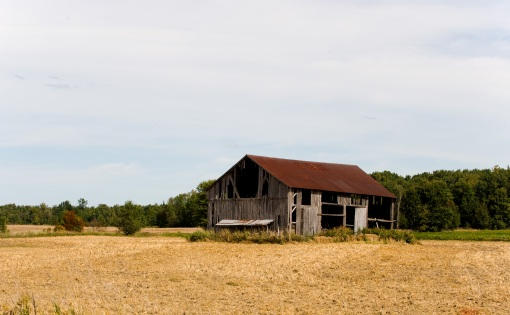 FarmStuff3, photo of old wooden barn, weathered from age with red roof surrounded by farm fields of yellow and brown grain, with a forest background.