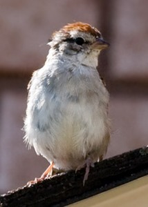small sparrow perched at the edge of a roof