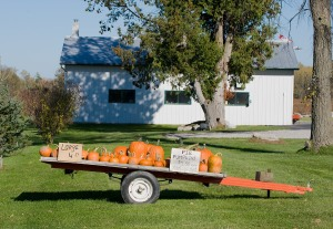A farm cart full of pumpkins for sale with signs.