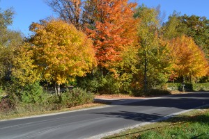The rural colours of fall - autumn in the country, Thanksgiving weekend trees, Canada