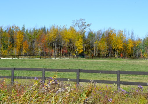 A farm field and laneway with a tree line full of colour - Thanksgiving Weekend, Canada.